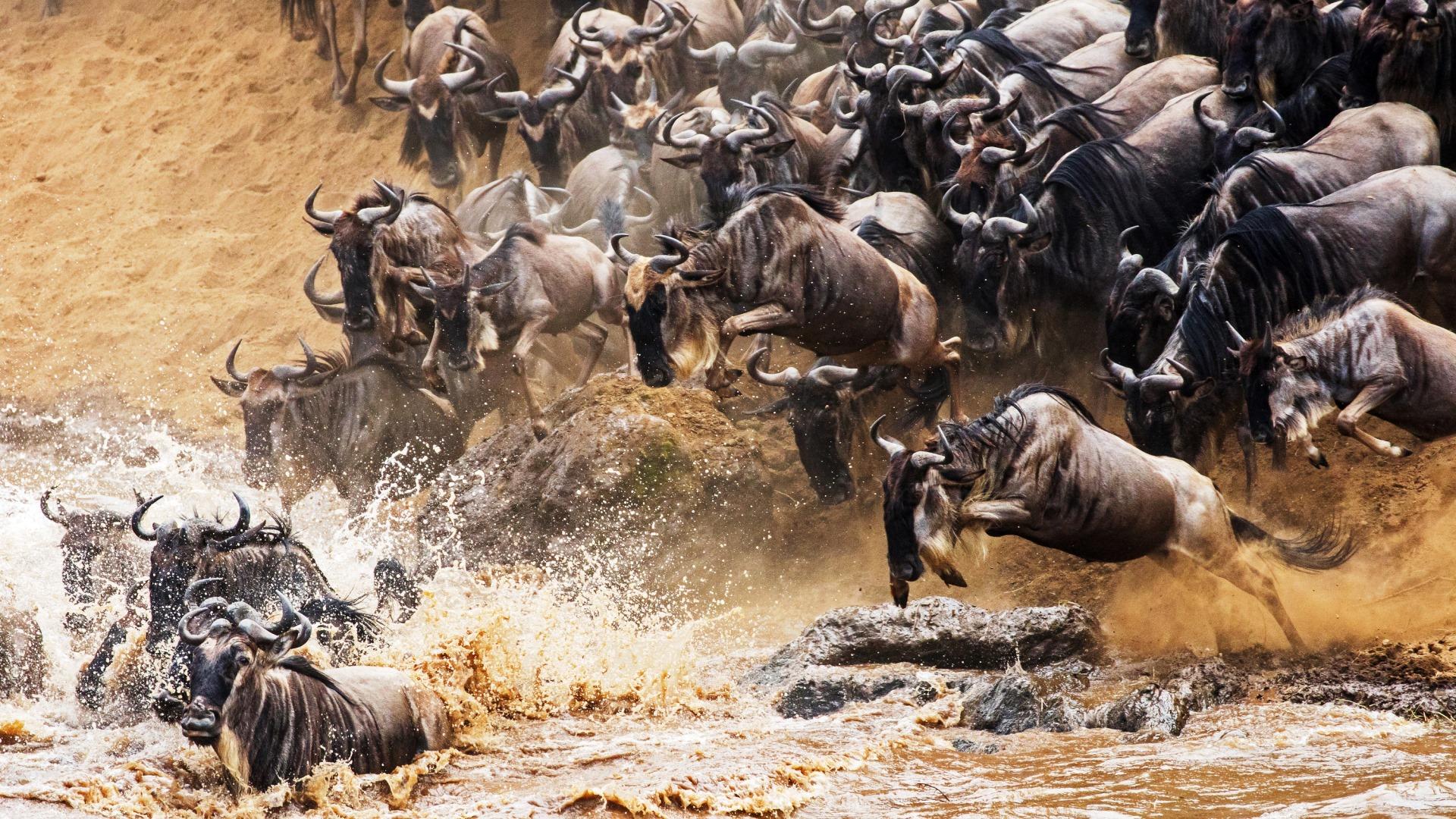 Angama Mara Migration